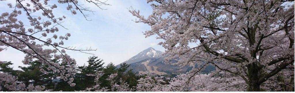 亀が城跡の桜と磐梯山