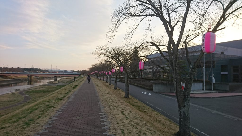 釈迦堂川の桜2019つぼみ
