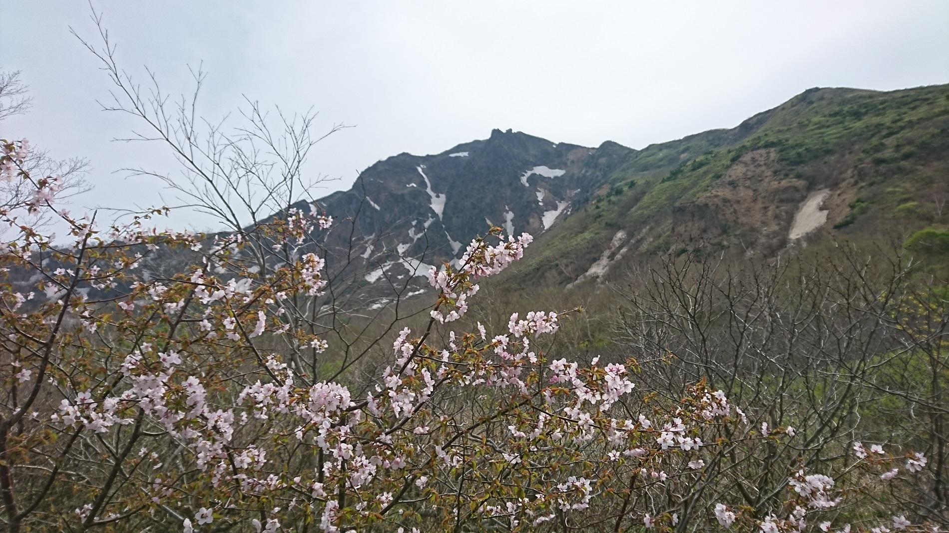 桜と磐梯山_沼ノ平
