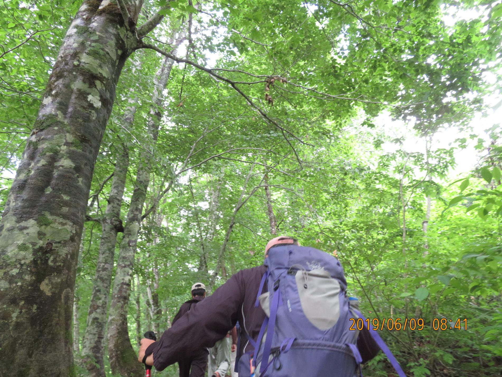 雄子沢登山口からの登山道