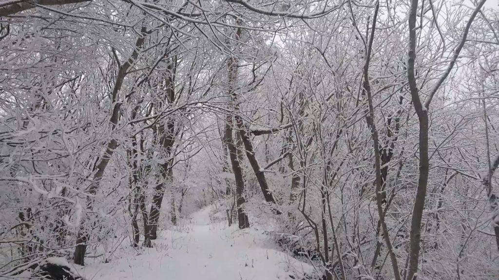 移ヶ岳樹氷4
