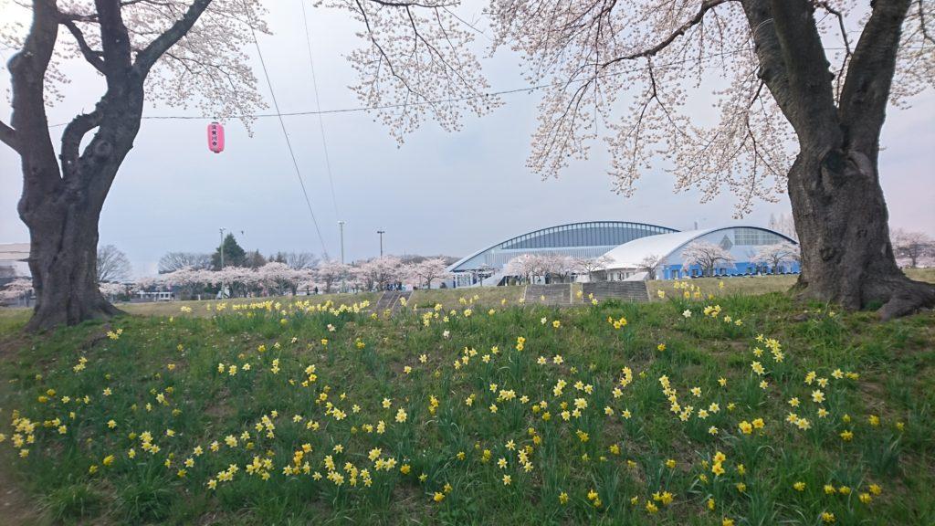 須賀川 釈迦堂川の桜DSC_0019