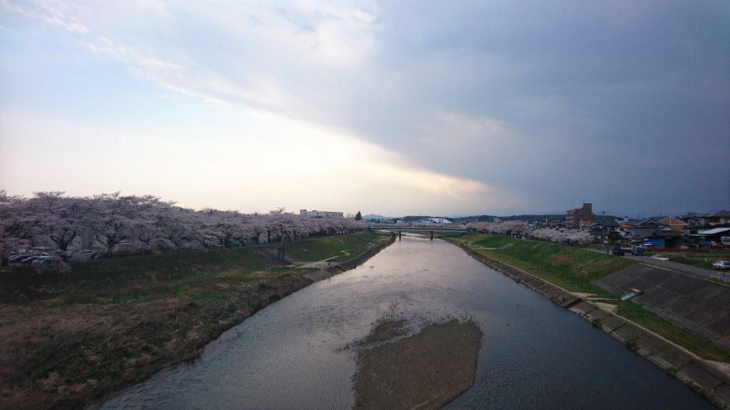 釈迦堂川橋桜DSC_0035