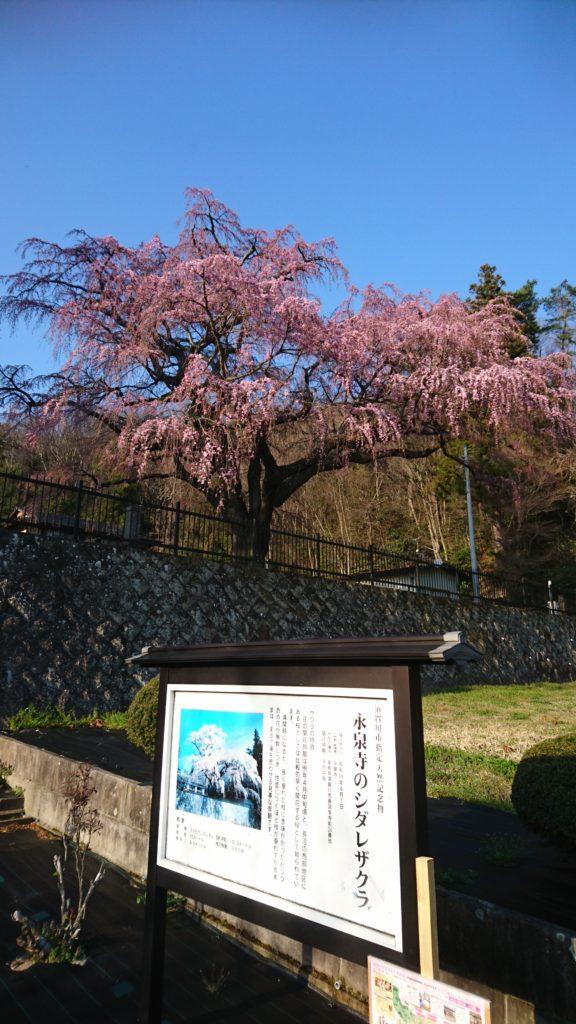 須賀川 永泉寺DSC_1441