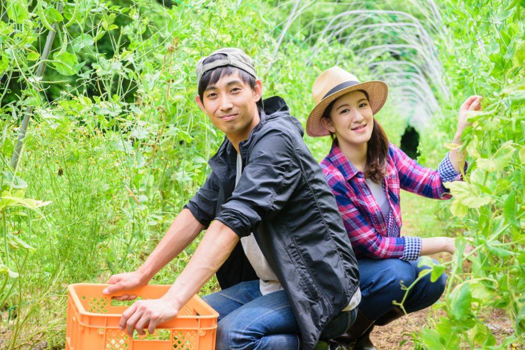 麦わら帽子の彼女と彼氏