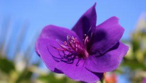 心に花を咲かせようボータン4