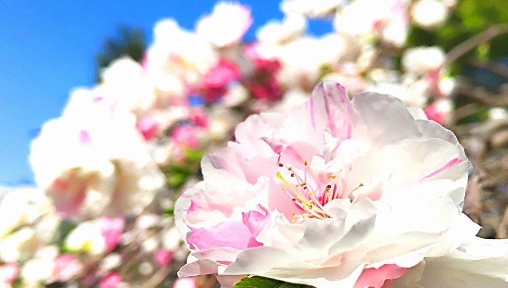 心に花を咲かせようボータン5