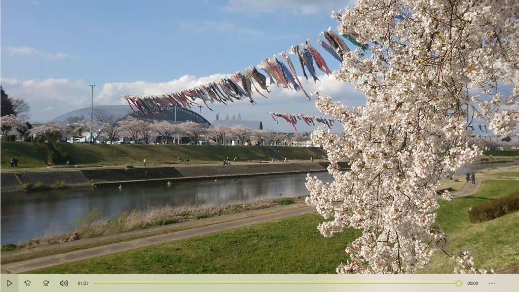 2020桜釈迦堂川2